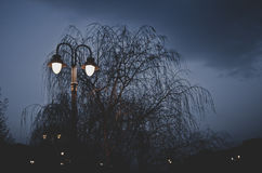 Night in the park. Are holy and beautiful tree. Beautiful sky interesting colors Royalty Free Stock Photography
