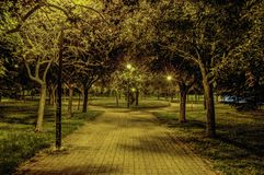 Night in the park Royalty Free Stock Photo