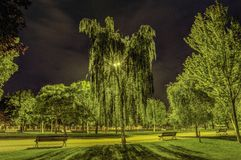 Night in the park Stock Images