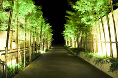 Night path. The bamboo walkway at night with the lighting decoration stock photos