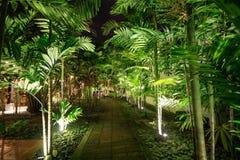 Night path. Lighted night path Royalty Free Stock Photos