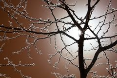 Hoarfrost covered tree in winter night. Night photo of a backlit tree with hoarfrost covered branches Royalty Free Stock Images