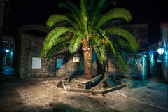 Night photo of big palm tree growing on old narrow street Stock Photos