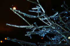 Night photo of blue icycle iced branches Stock Images