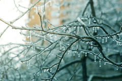 Night photo of blue icycle iced branches Stock Photos