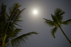 Palm Trees With Moon And Sky Royalty Free Stock Photos