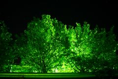 A lantern behind the trees, emerald stock images