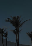 Night photography of palm trees in Kenting National Park royalty free stock images