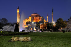 Night photos hagia sophia. istanbul-turkey Stock Images