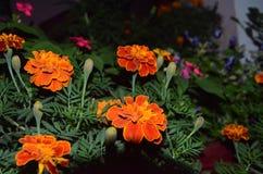 Night pics. Beautiful colour royalty free stock photos
