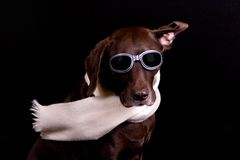 Night Pilot Dog Royalty Free Stock Photography