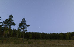 Night in the pine forest Stock Photos