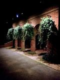 Night plants Royalty Free Stock Images