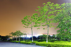 Night poinciana Royalty Free Stock Images
