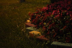 Night rain. The flowerbed after night rain Royalty Free Stock Images