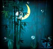Night rainforest. Illustration of  beautiful night rainforest Stock Photo