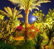 Night resort Stock Images