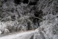 Night road in winter forest Stock Image