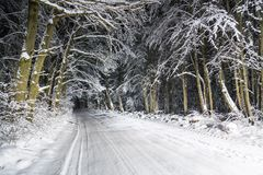 Night road in winter forest Royalty Free Stock Images