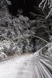 Night road in winter forest Stock Images