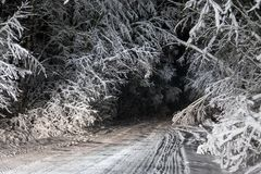 Night road in winter forest Royalty Free Stock Image