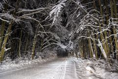 Night road in winter forest Royalty Free Stock Photo