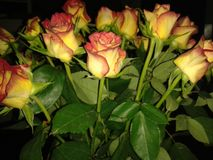 Night Roses. Romance Soul Hapinesse Stock Images