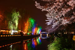 Night sakura. On the river bank at Changshu China Stock Photo