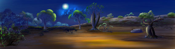 A night in savanna Panorama view. Digital painting of the night in savanna. Panorama view with moon, cactus and trees stock illustration
