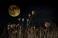 Night scene. Rural night scene with full moon Royalty Free Stock Photos
