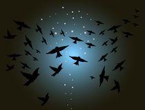 Night scene with birds Stock Photo
