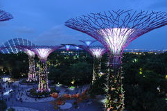 Night scene gardens by the bay supertrees singapore Royalty Free Stock Photos