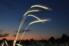 Night scene with grain Royalty Free Stock Photo