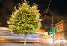 Night scene with green tree decorated with Christmas lights in t Royalty Free Stock Image