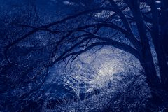 Night scene in a haunted forest, with branches overhanging a moon-lit river stock image