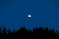 Night scene with moon. Royalty Free Stock Photos