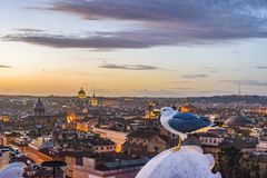 Night Scene Rome Cityscape Aerial View. Rome sunset cityscape aerial view from vitorio emanuelle monument viewpoint Royalty Free Stock Photography