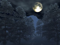 Night scene. Winter night scene with trees and moon Stock Photos