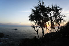 Night sea bay with palms silhouette Royalty Free Stock Image