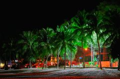 Night seaside promenade. Lit by street lights palm trees on the beach. Long shadows of the trees in light street lighting. stock photography