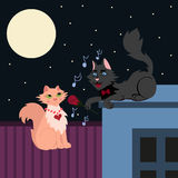 Night serenade, two loving cats, cat in love sings the serenade Stock Photography