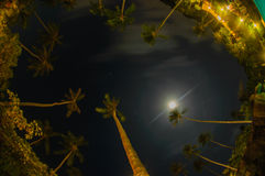 Night shoot of palm tree Royalty Free Stock Photography