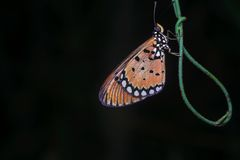 Night shot. Of butterfly with black background Stock Photos
