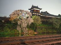 Night shot of Japanese castle with cherry blossoms Royalty Free Stock Image