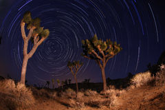 Night Shot of Star Trails in Joshua Tree National. Star Trails at Night in Joshua Tree National Park in California royalty free stock images