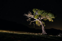 Night shot of a Tree at national Park of Sierra Ma Stock Photo