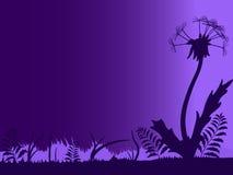 Night silhouette of dandelion Stock Photo