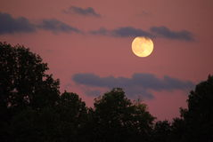 Night Sky. A bit of an enchanted look with a pinkish sky with clouds and a full moon Stock Photo