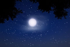 Night sky full moon. Night sky with full moon and tree Royalty Free Stock Images