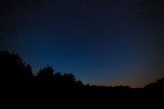 Night sky with bright stars. Against the background of tree crow Royalty Free Stock Photography